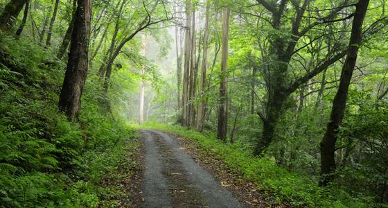 Parque Natural Fragas do Eume