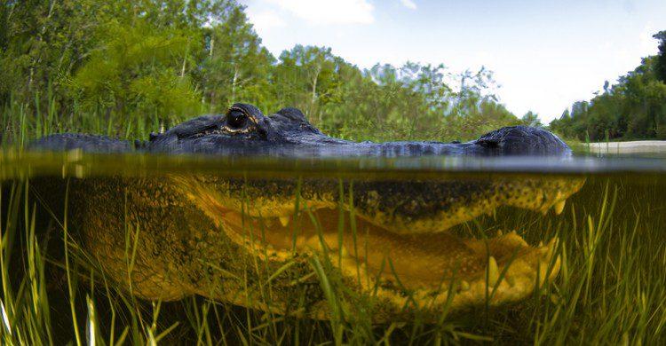 Everglades (iStock)