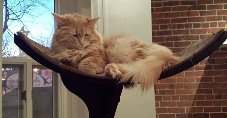 Cat Cafe/ Montreal (cafedeschats.ca)