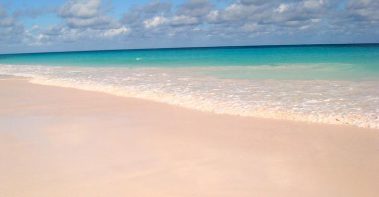 Playa de Pink Sand. Mike's Birds (Flickr)