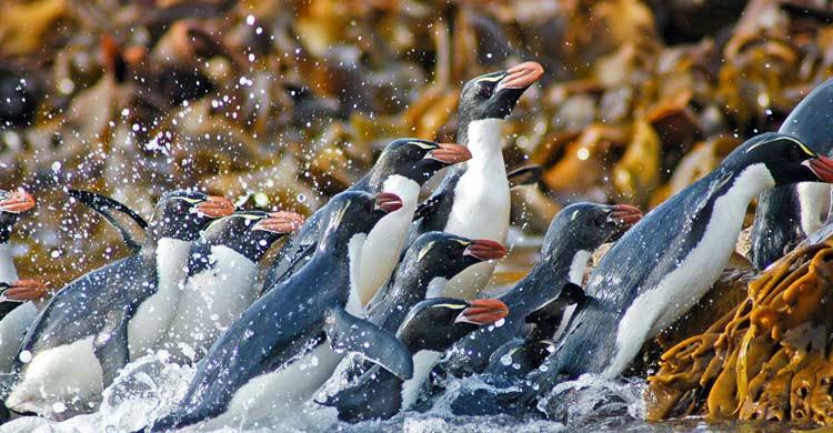 El reino animal, protagonista en Nueva Zelanda (iStock)