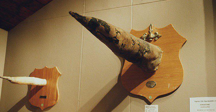 Imagen de uno de los penes expuestos más grandes (http://phallus.is/es/fotos.html).