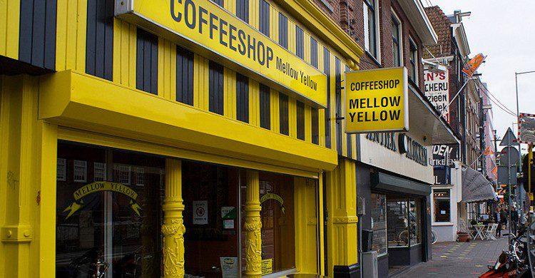 Salida del Mellow Yellow (mdhfc, Foter)