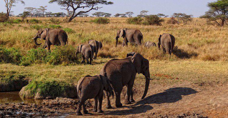Parque Nacional del Serengueti (wikimedia.org)
