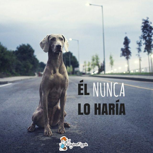 Da Internacional del Perro Callejero La falta de concienciacin sobrehellip