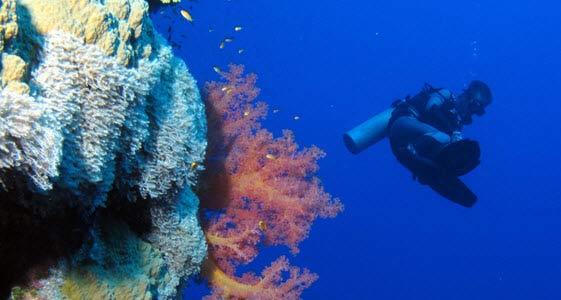 Las aguas egipcias del Mar Rojo están repletas de espectaculares corales