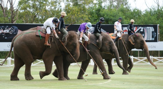 Más de cincuenta elefantes participan en la competición benéfica