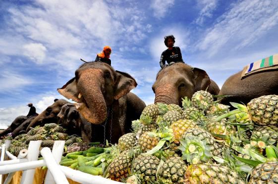 Un elefante consume más de 250 kilos de alimentos al día