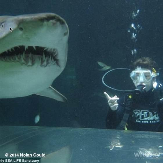 Nolan Gould en el acuario de Sydney
