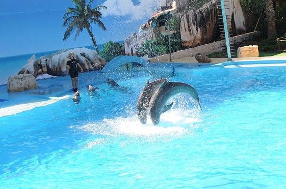 Bañarse con delfines en el Algarve
