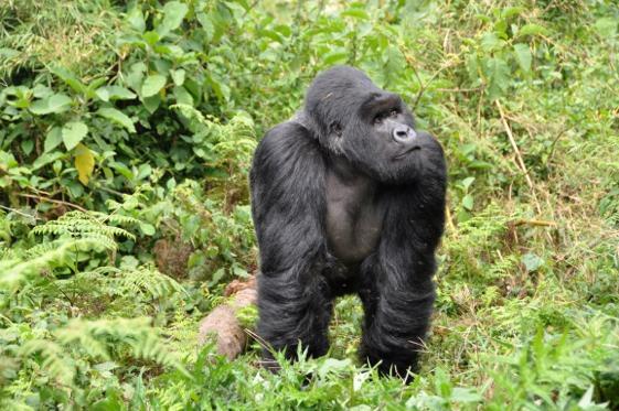 República de Congo