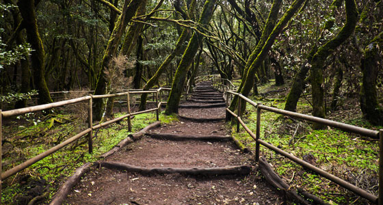 Bosque encantado en Garajonay. Foto: Diego Delso