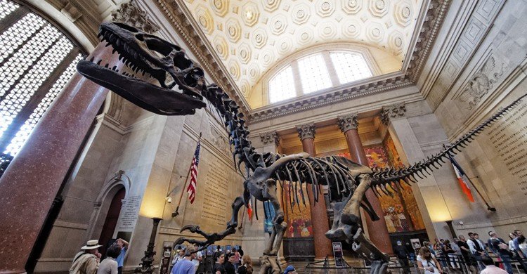 AMERICAN MUSEUM OF NATURAL HISTORY (Flickr)