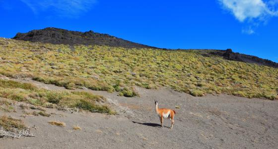 Desierto de la Patagonia