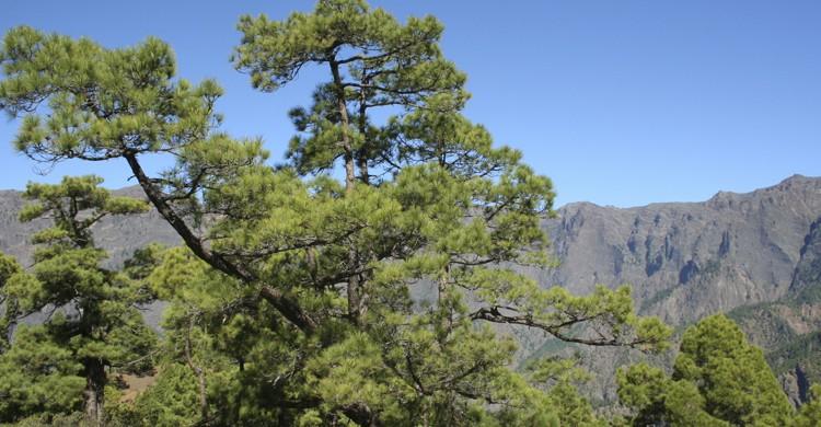 Parque Nacional Caldera de Taburiente (Flickr)