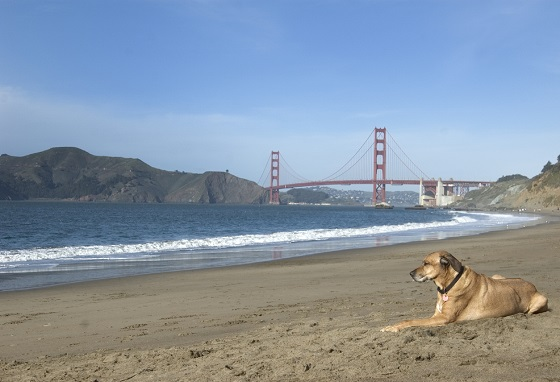 San Francisco, una de las ciudades más pet-friendly del mundo
