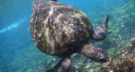 Islas Galápagos / Foto: p.j.k.