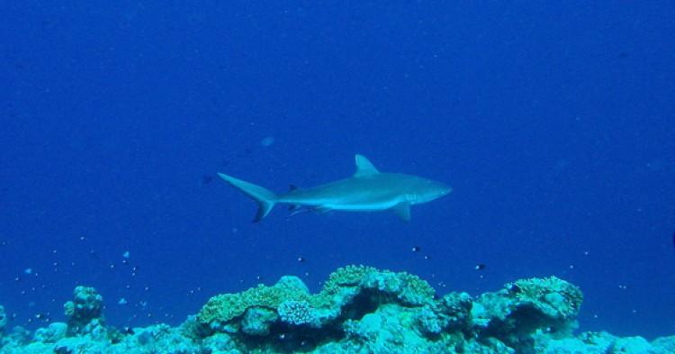 Palau / Foto: mattk1979