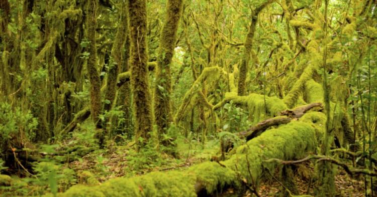 Hiking in the National Park Garajonay on La Gomera Island
