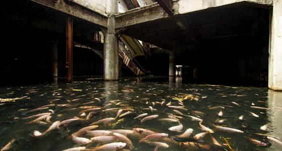 Bangkok / Foto: Jesse Rockwell