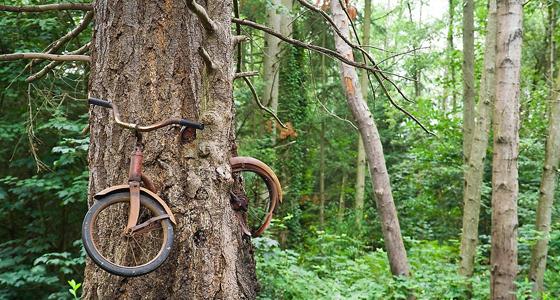 Bici en árbol / Foto: Ethan Welty