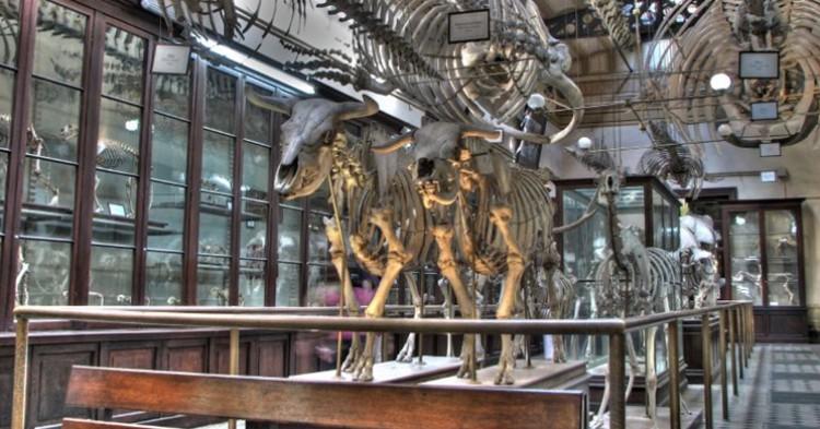 Imagen de un museo de Ciencias Naturales. Federico Cristina (Flickr).