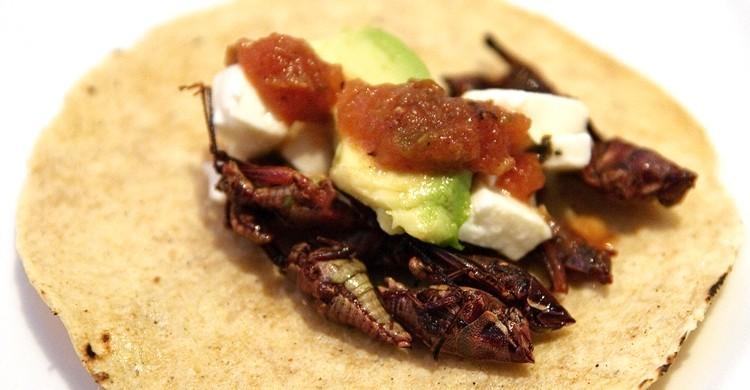 Chapulines en taco. William Neuheisel (Flickr)
