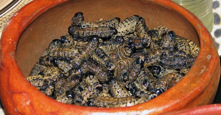 Cuenco de larvas mopane en Namibia. NH53 (Foter)