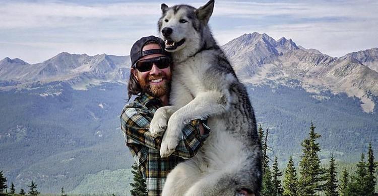 Loki (https://www.facebook.com/lokithewolfdog)