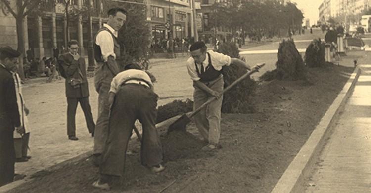 Imagen antigua de unos operarios plantando árboles en la mediana de la calle. Teresa Avellanosa (Flickr).