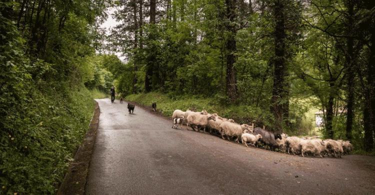 Pastores por un día (facebook Alluitz Natura)