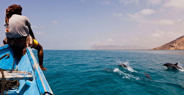 Delfines en Socotra - Sara Janini (Ocho Leguas)
