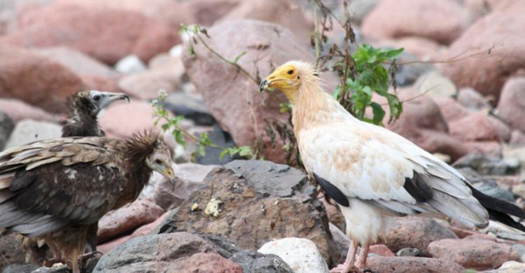 Socotra - Keith&Denise (Flickr)
