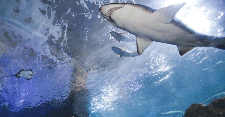 Aquariumss (aquariumss.com)