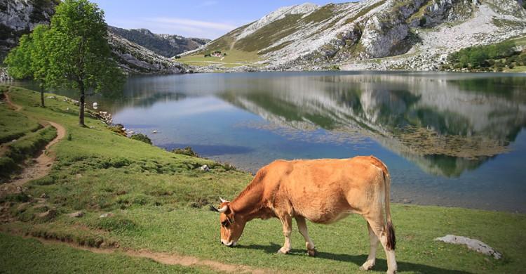 2.295 cosas que hacer en Asturias