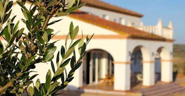 Vivienda del cortijo tras un olivo. (www.cortijolostomillares.com)
