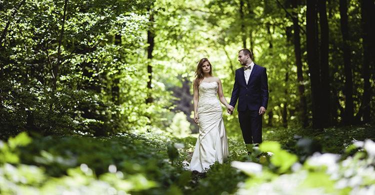 En un bosque (iStock)