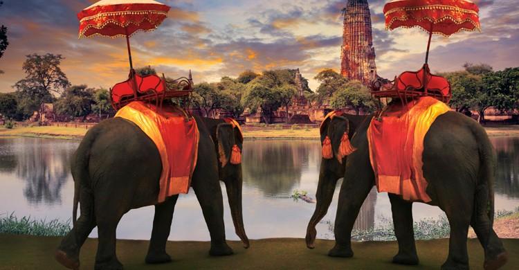 Elefantes en Ayuthaya (iStock)