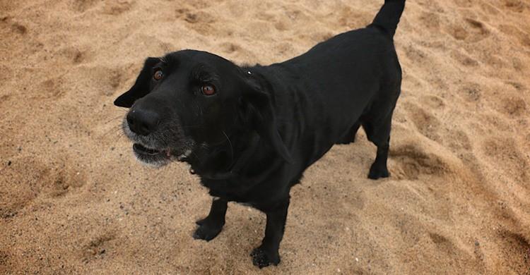 Un perro en la playa. Partido Animalista - PACMA - (Flickr)