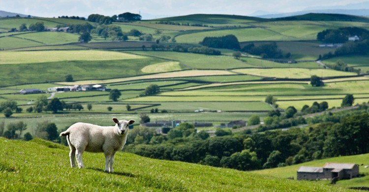 Yorkshire Dales (Istock)