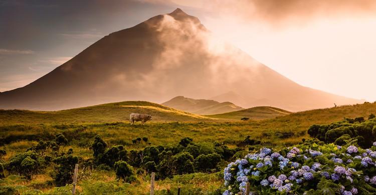 pico / cima de la montaña (Istock)