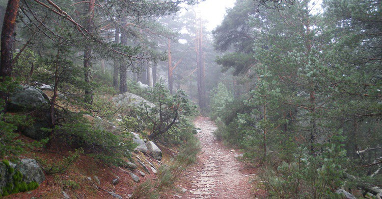 Parte del camino Schmidt. Luiyo (Flickr)