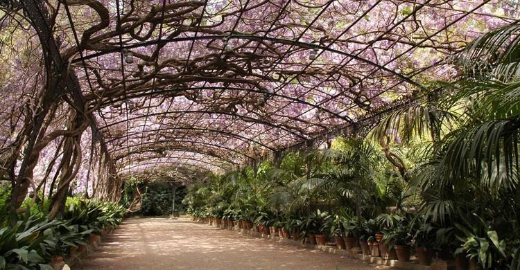 Paseo. Jardín Botánico - Histórico La Concepción (Facebook)