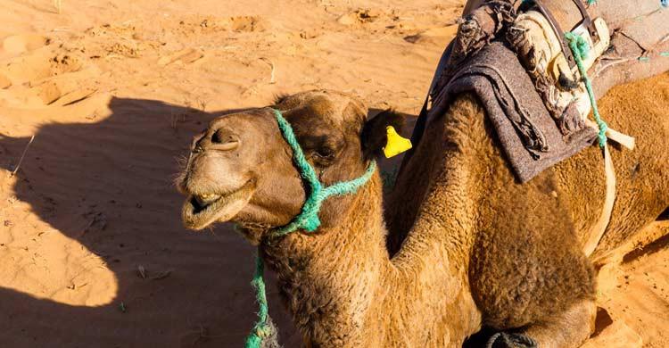 Si piensas hacer una excursión por el desierto, extrema la precaución (iStock)