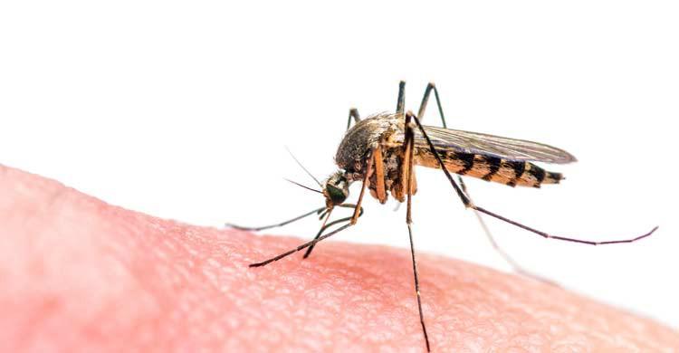 La picadura de un mosquito puede transmitir la malaria o paludismo (iStock)