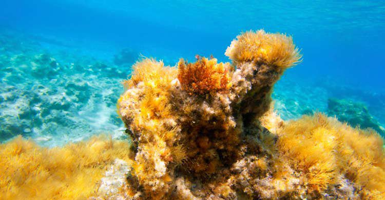 Formentera e Ibiza también acumulan belleza para bucear bajo sus aguas (iStock)