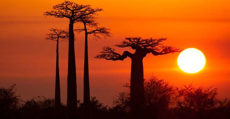 Madagascar es conocida como la Gran Isla Roja (iStock)