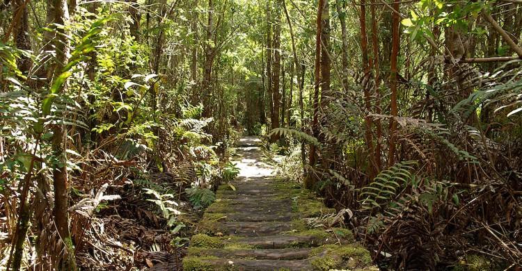Caminos a través del parque Pumalín (draculina_ak, Foter)