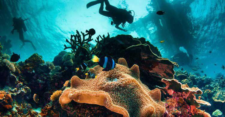 Filipinas es uno de los mejores destinos para la práctica del buceo (iStock)