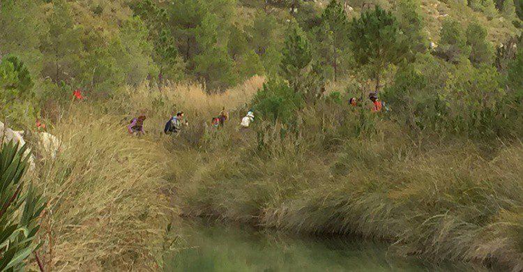 Naturaleza a ras de río en Ayora. Manel (Flickr)